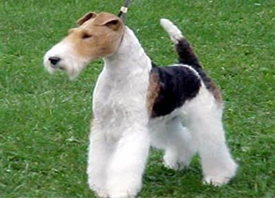 Породы охотничьих собак с фотографиями и названиями, характеристики и описание