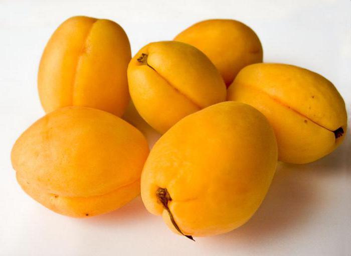 Армянский абрикос Шалах: описание, сроки созревания, фото. Как правильно есть армянские абрикосы