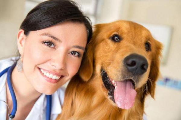Бородавки у собак: фото, лечение