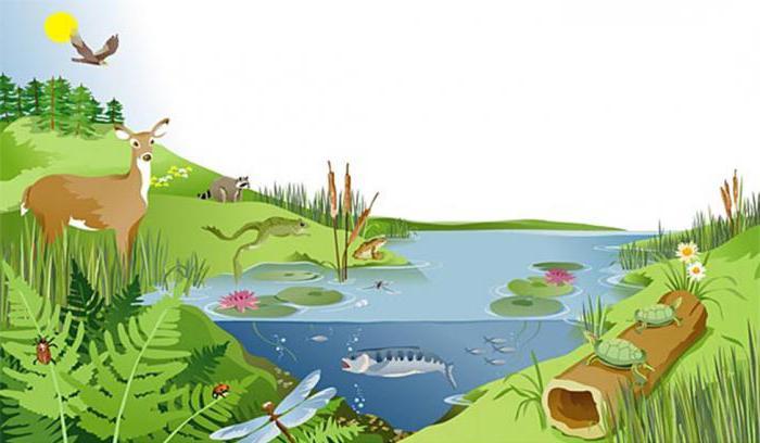 Чем природная экосистема отличается от агроэкосистемы? Отличия агроценоза от естественных систем