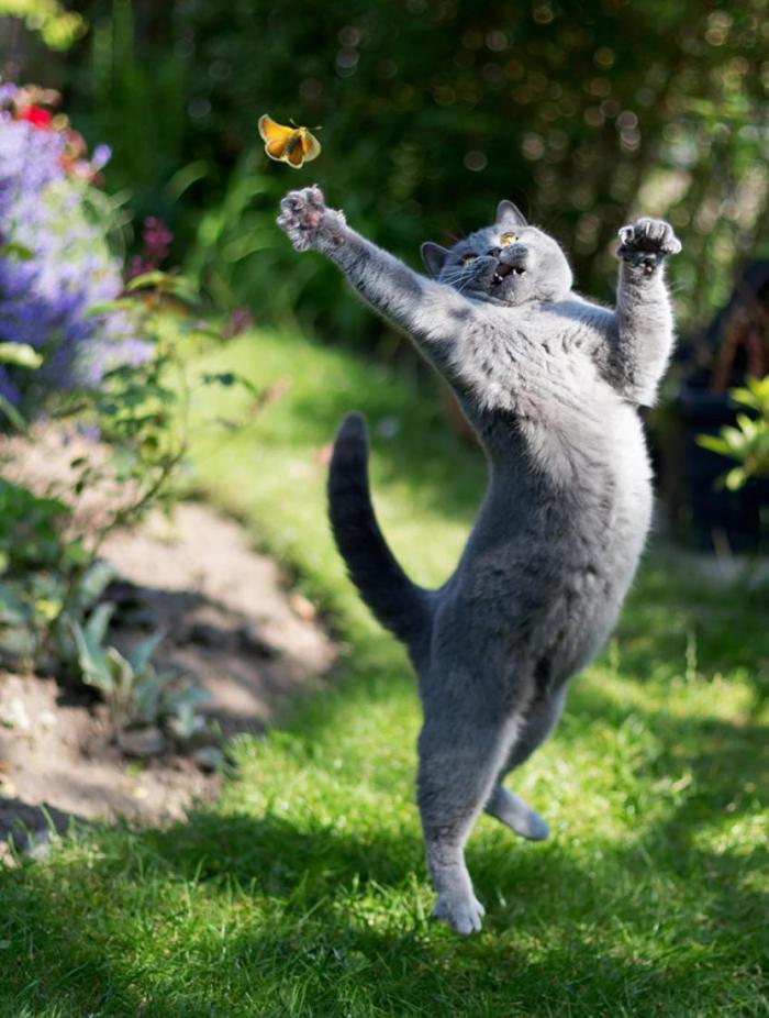 20 фото кошек, сделанных в правильный момент