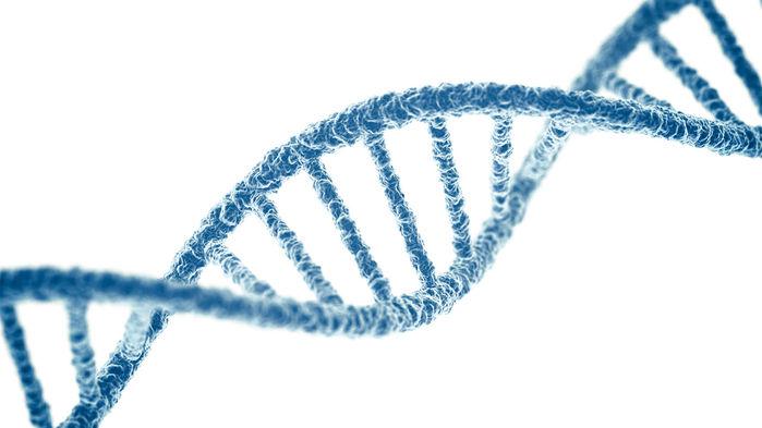 ДНК человека
