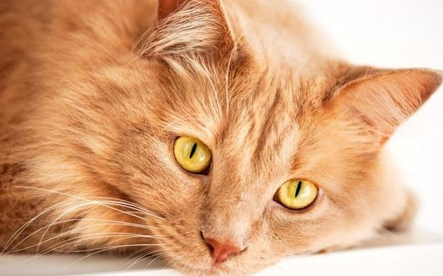Красные коты и кошки
