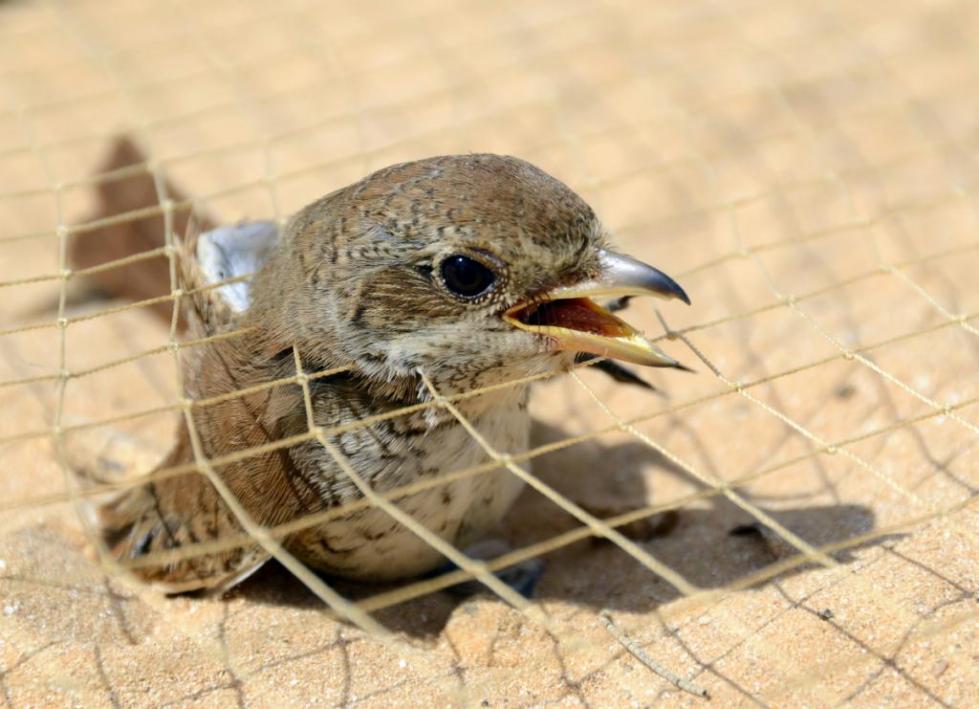 Сеть для ловли птиц
