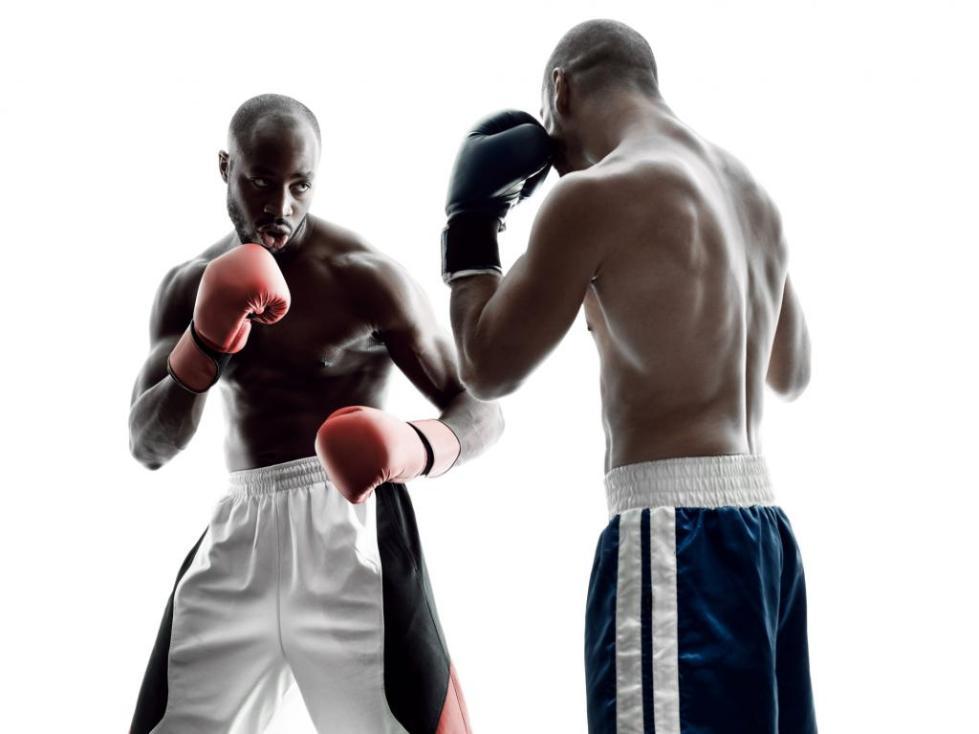 боксеры в стойке