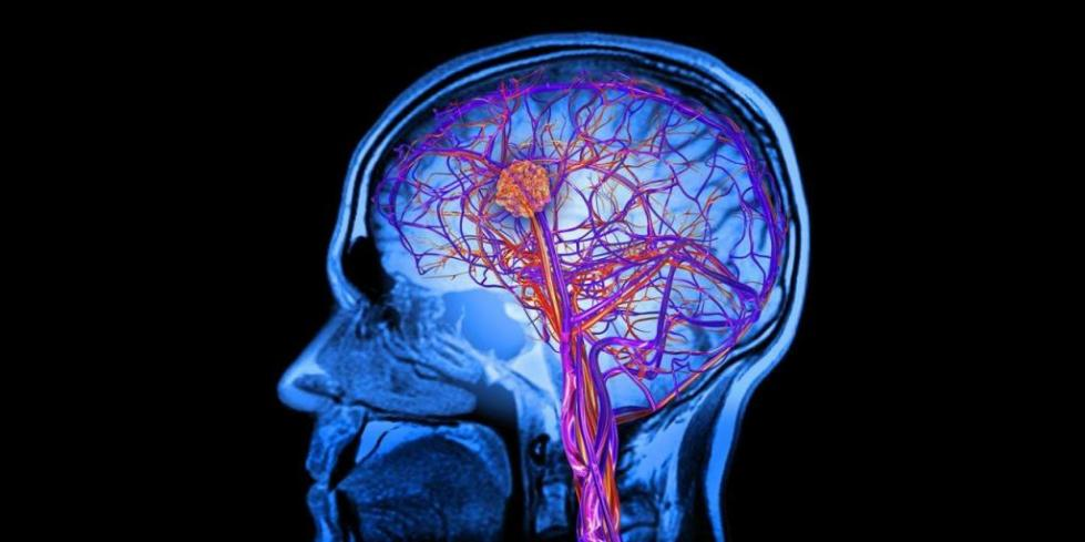 На сколько процентов работает человеческий мозг