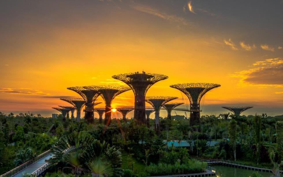 рассвет в садах Сингапура