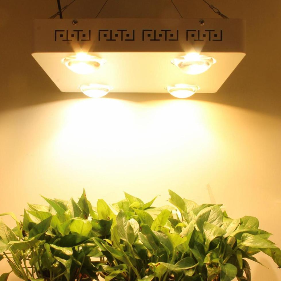 какие лампы для подсветки растений лучше