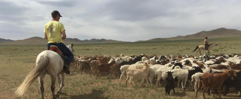 Скотоводство в Монголии