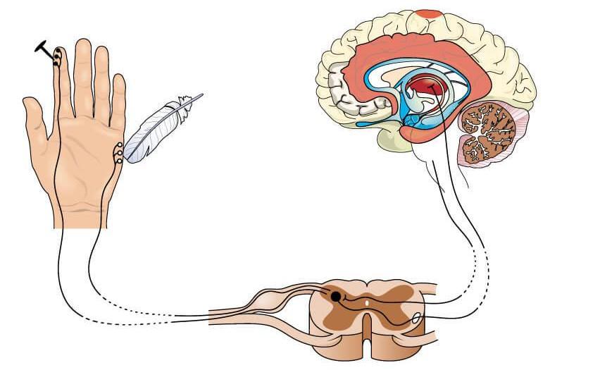 характеристика ноцицептивной боли