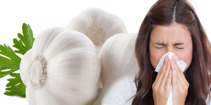 Чеснок в борьбе с простудой