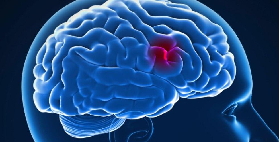 работа мозговых клеток