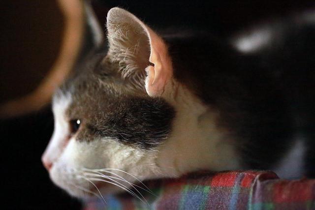 фото уха кошки
