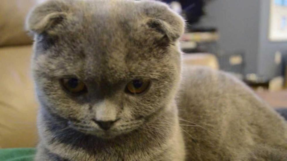 строение уха кошки фото