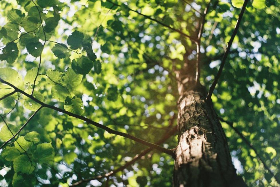 сажать дерево во сне для женщины