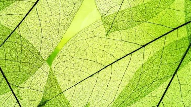 При дыхании растения выделяют кислород