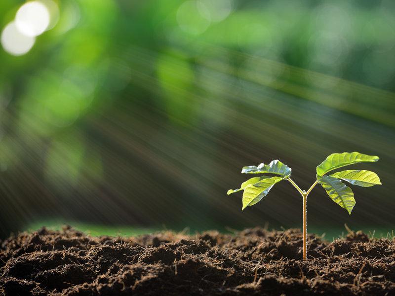 Когда растения выделяют кислород