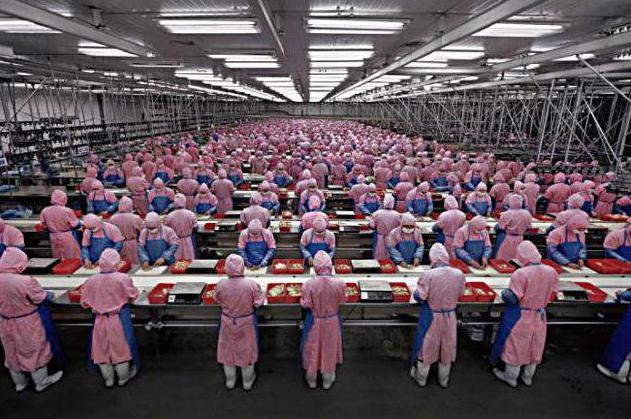Производственная деятельность
