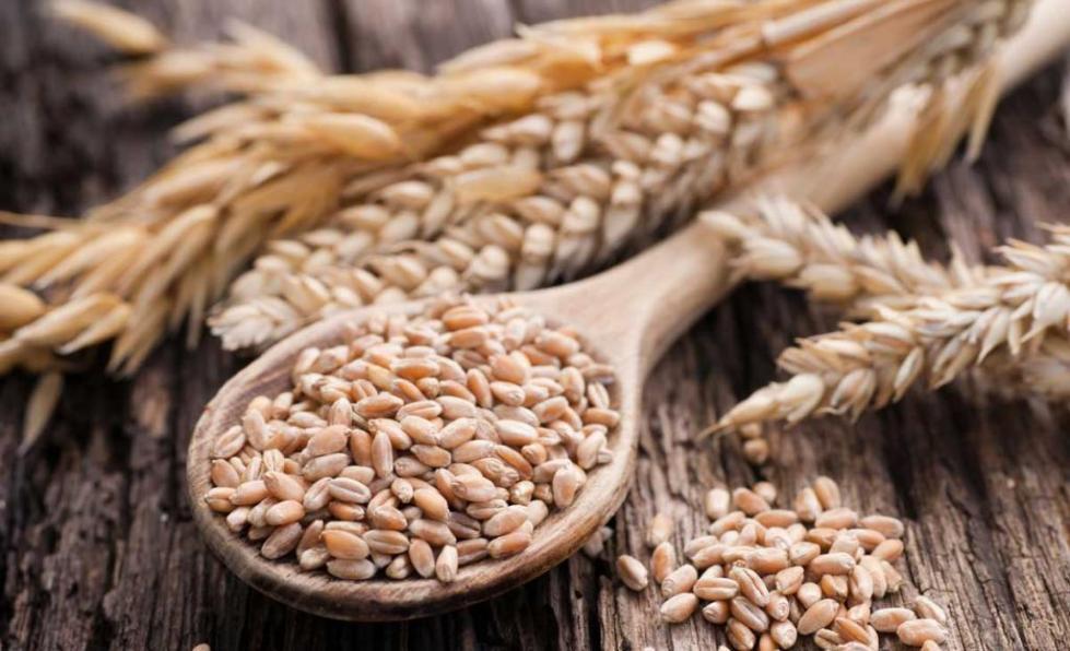 Пшеница твердых сортов