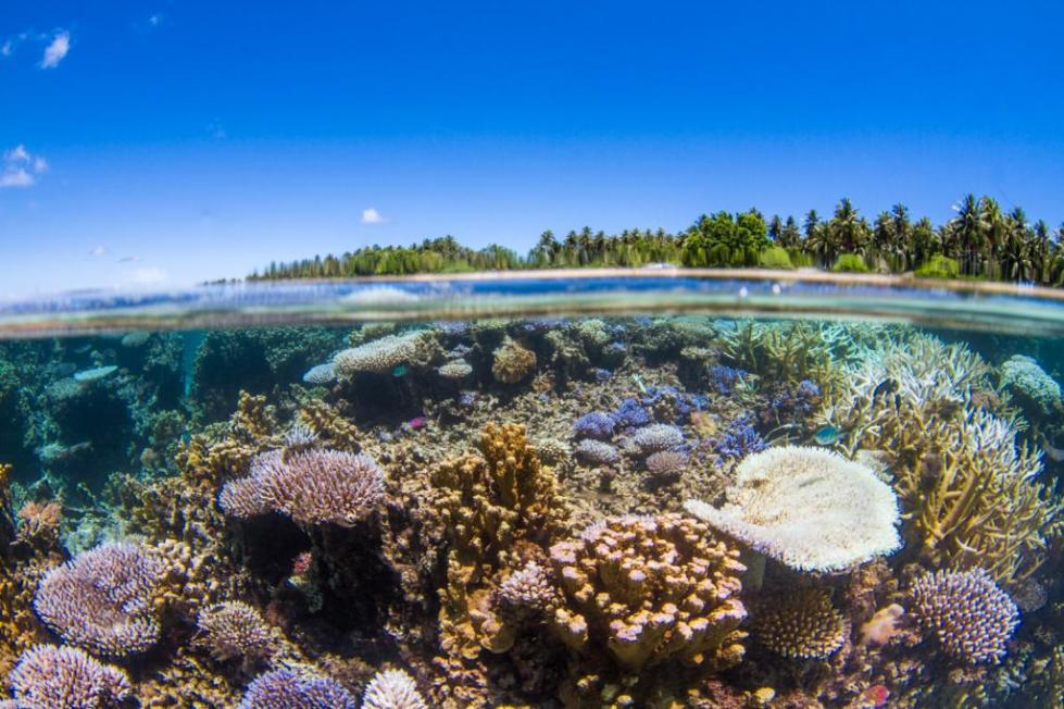 Срез воды, внизу риф-подводная скала
