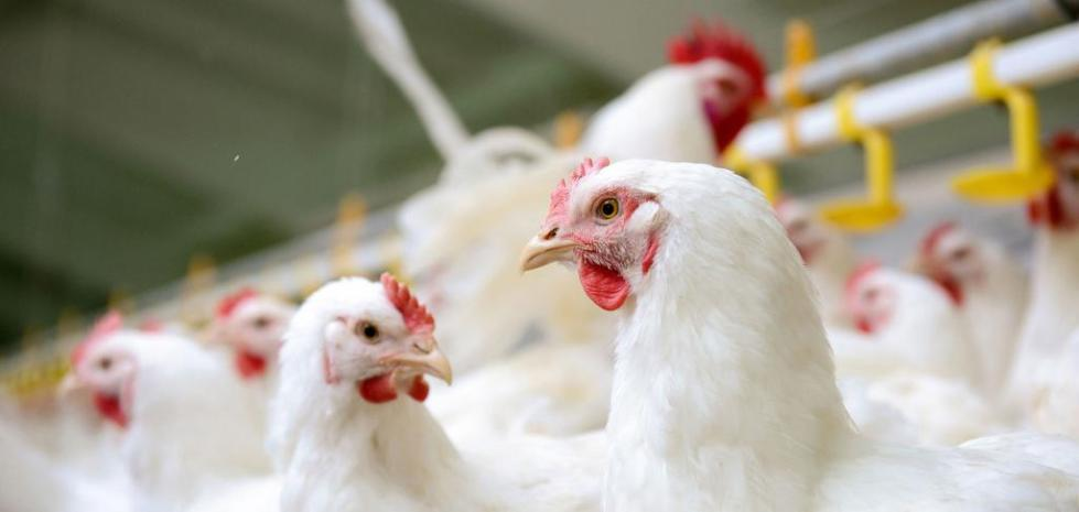 Фумаровая кислота - применение в сельском хозяйстве