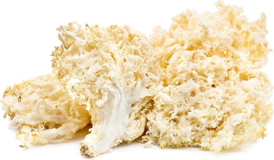 морские грибы по корейски польза и вред