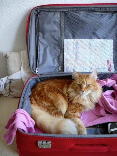 Frau Fuchs will mit nach New York.