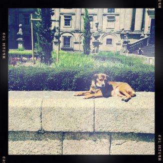 Hund vor Kathedrale Santiago de Compostela