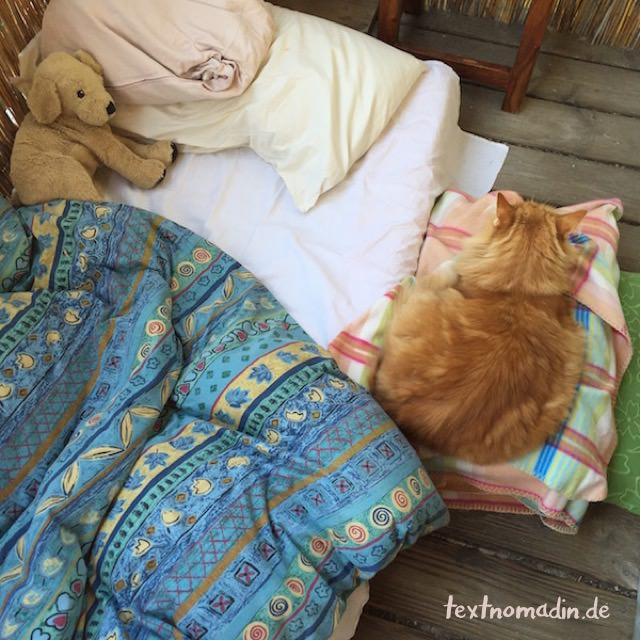 Katze im Balkonbett, morgens