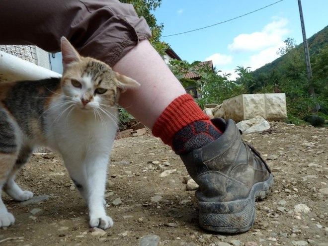 Reiseglück ist...tierische Wegbegleiter