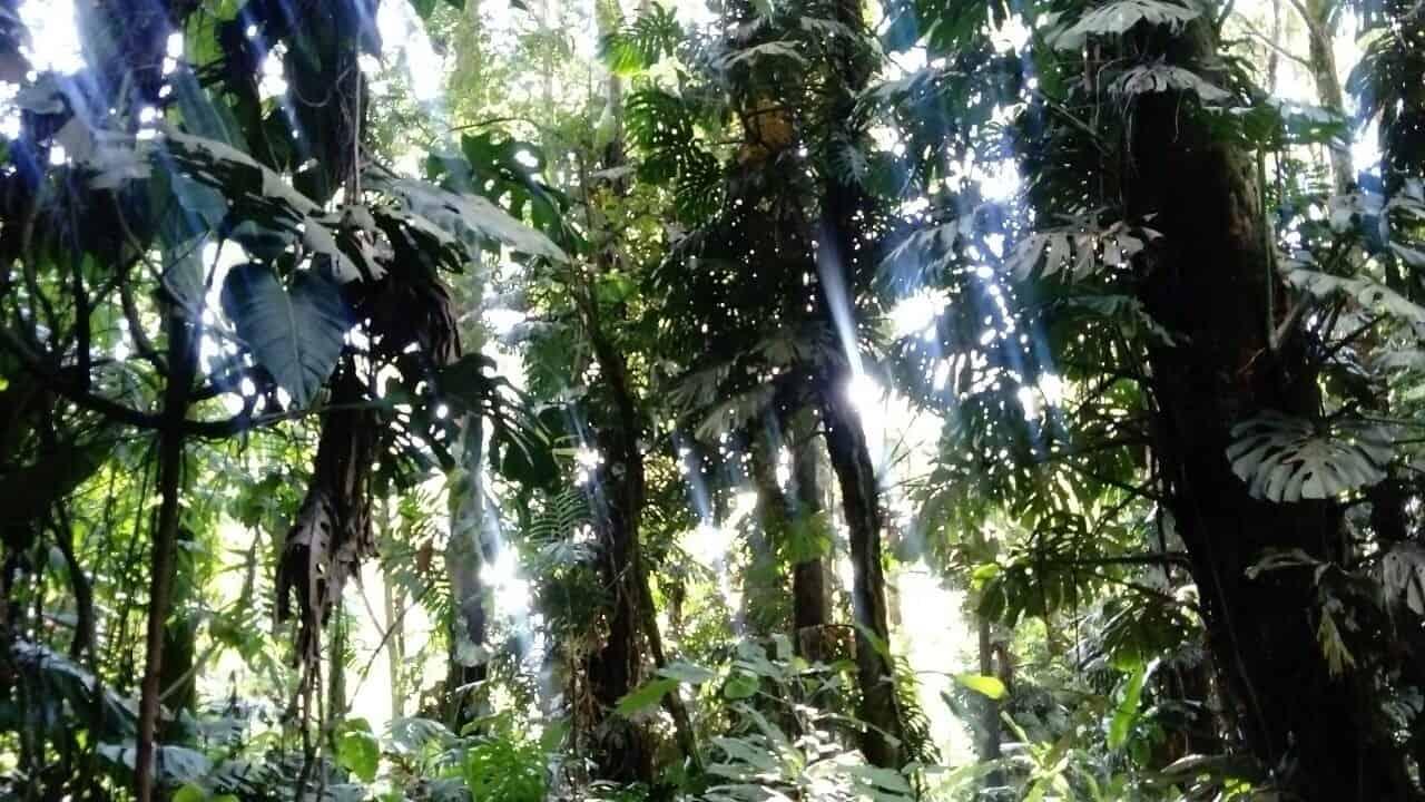 Sonne im Tropenwald (Bild: Martina Schäfer, Textagentur Textrakt)
