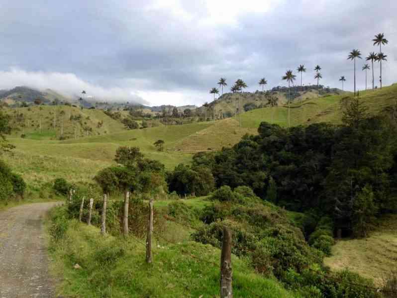 Landschaft mit Wachspalmen im Departamento Caldas (Bild: M. Schäfer)