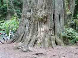 Stanley Park, Vancouver (Bild: M. Schäfer, Textrakt)
