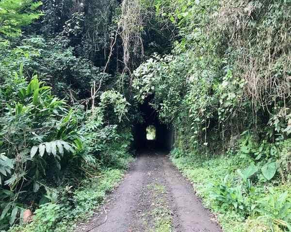 Kürzerer Tunnel (Bild: M. Schäfer)