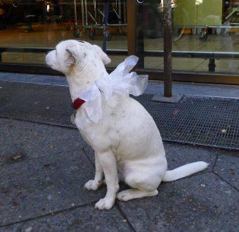 Hund 2