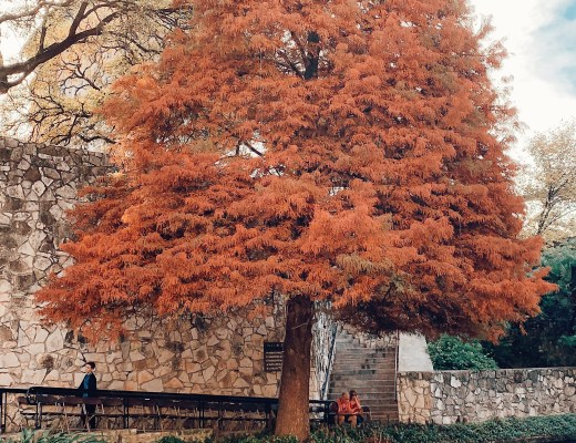 Places to visit in Texas, travel, fall leaves, San Antonio Riverwalk