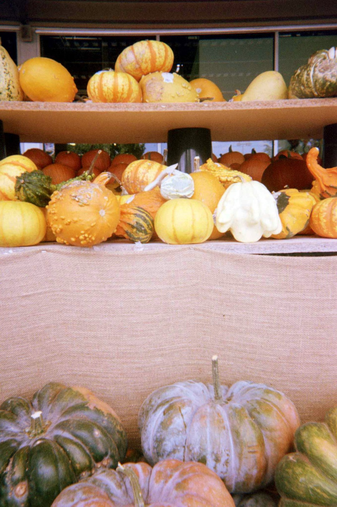 pumpkins, film photography, disposable camera, fall seasonal shots,