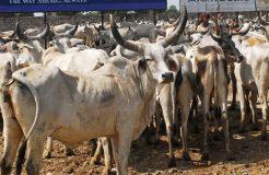 गाय को बनाओ राष्ट्रीय पशु, हिंदुओं की आस्था का हो सम्मान- इमाम