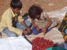मध्य प्रदेश : पुलिस ने 65 बाल मजदूर मुक्त कराये