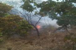 डिंडोरी जंगल में आग, वन अमला चैन की नींद सोया