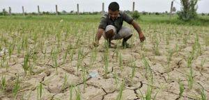 इस साल सामान्य से ज्यादा होगी बारिश : मौसम विभाग