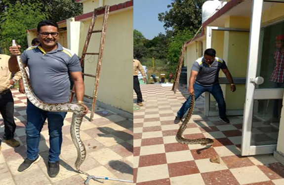 indian-rock-python-found-in-power-house