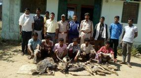 कान्हा रिजर्व : सांभर का शिकार करते 6 शिकारी गिरफ्तार