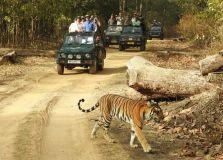 जब शिवराज सिंह चौहान के सामने आ गया टाइगर