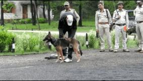 कान्हा टाइगर रिज़र्व की हिफाज़त में तैनात बेल्जियन शेफर्ड