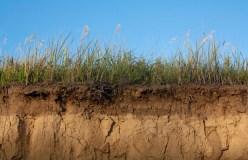 खंडवा: मिट्टी धंसने से चार बच्चों की मौत