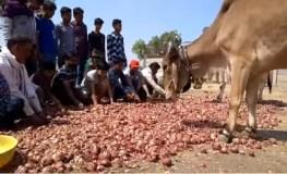 खंडवा : गुस्साए किसानों ने सड़कों पर फेकी प्याज