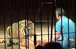 दुनिया के सबसे बड़े रिंग मास्टर की मौत, बाघ मृत शरीर से आधे घंटे तक खेलते रहे