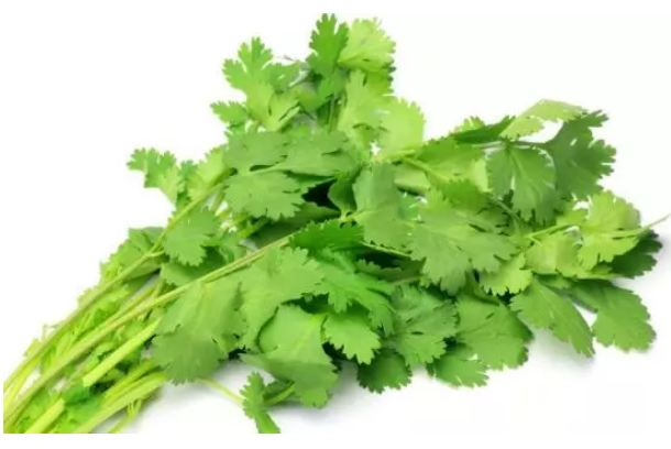 Coriander-leaves-can-improve-your-skin-color