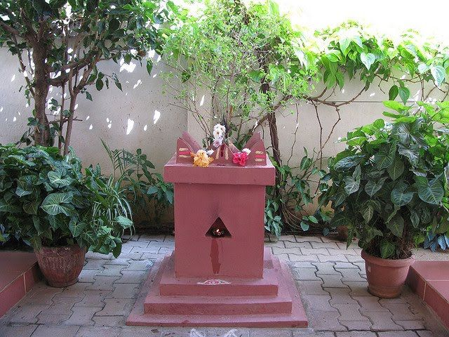 If-you-are-thinking-of-planting-a-Tulsi-plant-in-the-house-then-all-the-things-should-be-done-before-going.